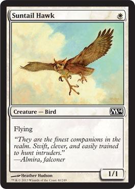 suntailhawk